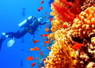 11 places to Scuba Dive in New Zealand