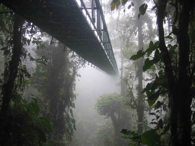Rainforest Aerial Walkways
