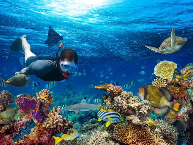 Snorkeling in Cairns